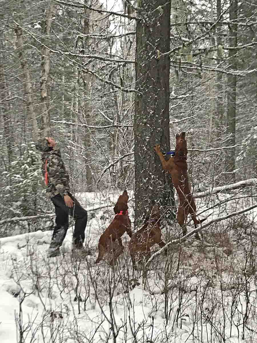 Brandon Tames and his hounds with a treed cat.